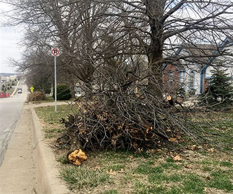 A large pile of tree limbs at the curb of the street.